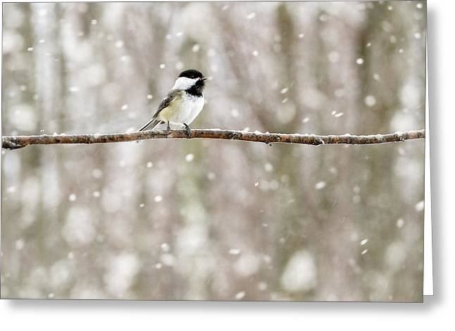 Sing Chickadee Sing Greeting Card by Angie Rea