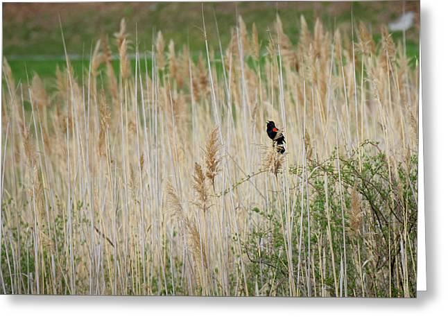 Sing For Spring Greeting Card by Bill Wakeley