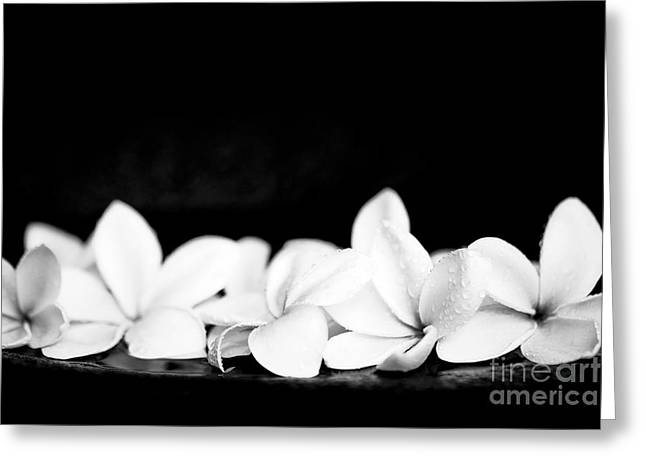 Singapore White Plumeria Flowers The Fragrance Of Hawaii Greeting Card by Sharon Mau