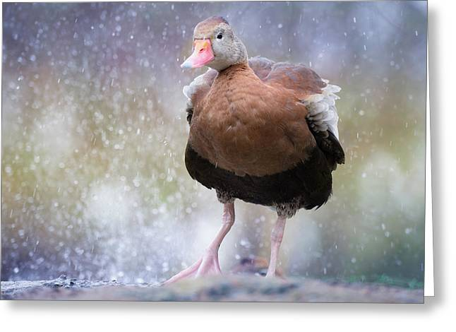 Greeting Card featuring the photograph Singing In The Rain by Cindy Lark Hartman