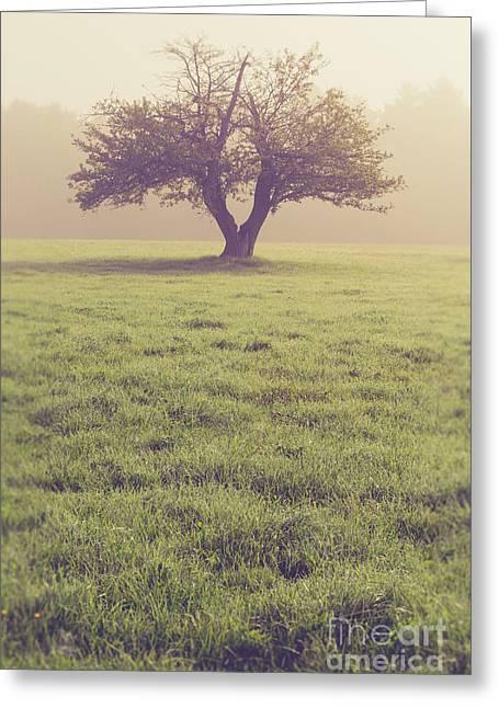 Single Apple Tree In The Fog Greeting Card
