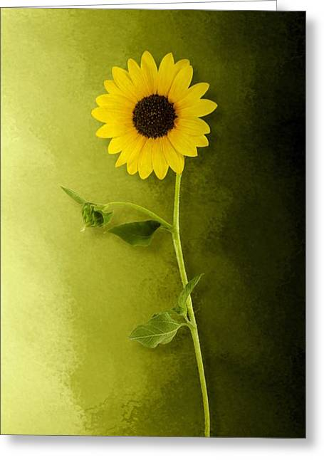 Greeting Card featuring the photograph Single Long Stem Sunflower by Debi Dalio