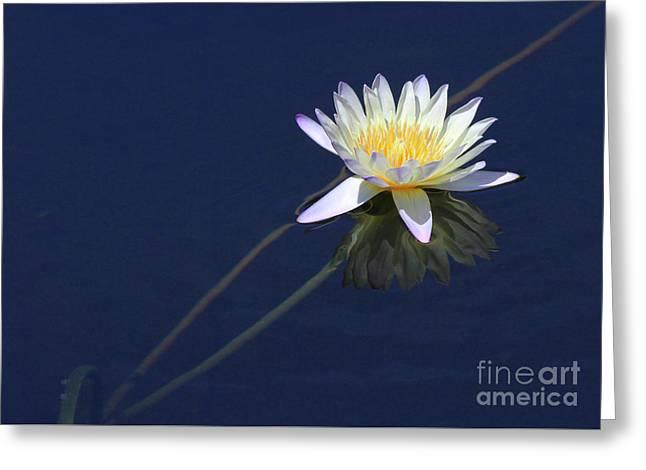Single Lotus Greeting Card