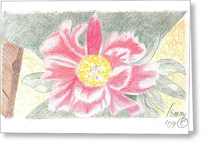 Single Pink Peone - 2 Greeting Card by Rod Ismay
