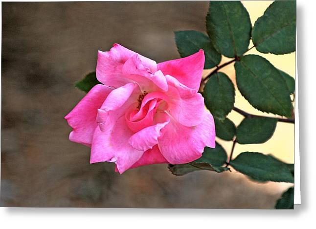 Single Red Rose Greeting Card by Francesco Roncone