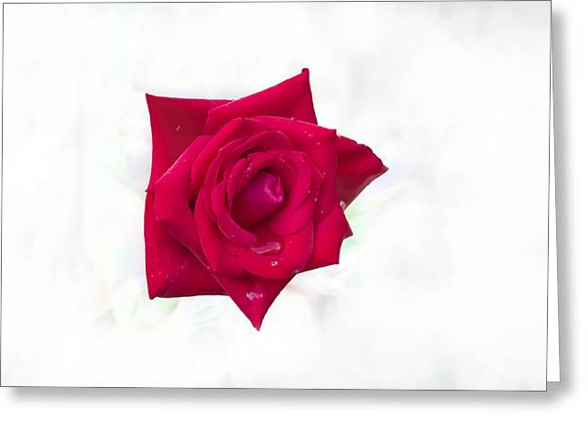 Single Red Rose Greeting Card by Judy Hall-Folde