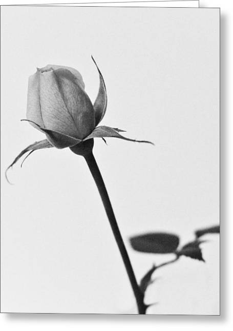 Single Rose Greeting Card by Ryan Kelly