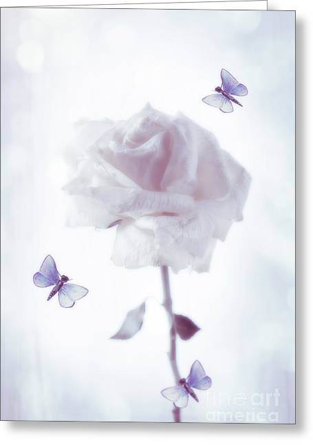 Single Rose Stem Greeting Card by Amanda Elwell