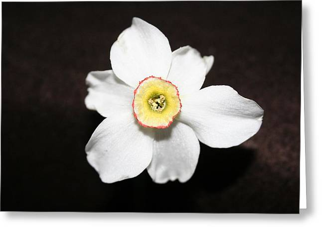 Single Spring Flower Greeting Card by Susan Pedrini