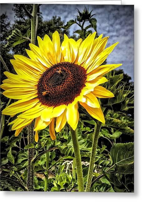 Single Sunflower Greeting Card