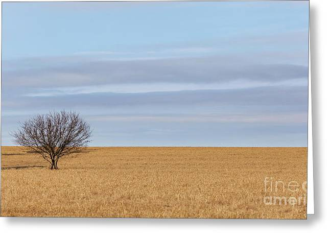 Single Tree In Large Field With Cloudy Skies Greeting Card