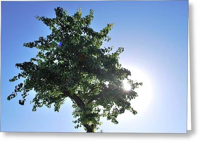 Single Tree - Sun And Blue Sky Greeting Card by Matt Harang