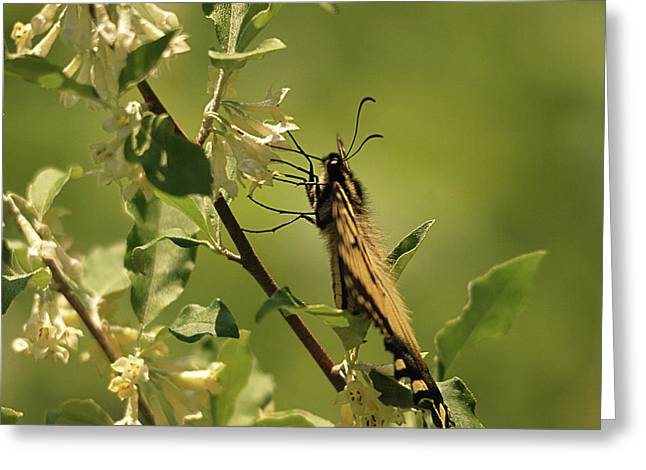 Greeting Card featuring the photograph Sipping In The Shade by Susan Capuano
