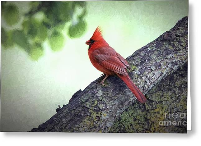 Sir Cardinal Greeting Card