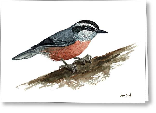 Sitta Canadensis Greeting Card by Sean Seal