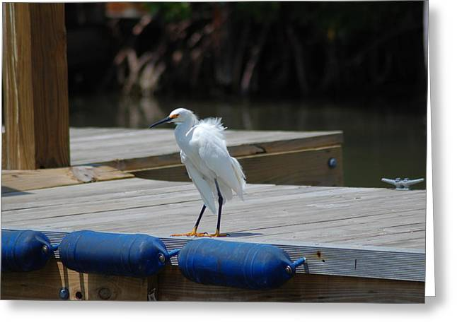 Sitting On The Dock Of The Bay Greeting Card by Clay Peters Photography