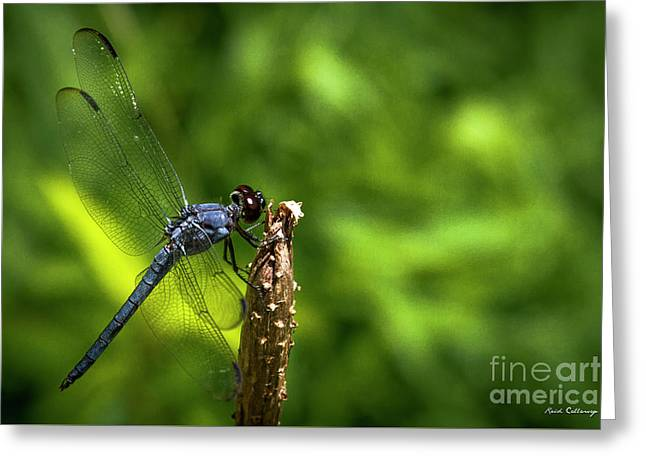 Greeting Card featuring the photograph Sitting Pretty 2 Dragonfly Art by Reid Callaway