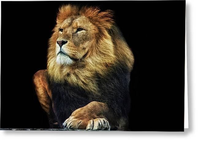 Sitting Proud Greeting Card by Martin Newman