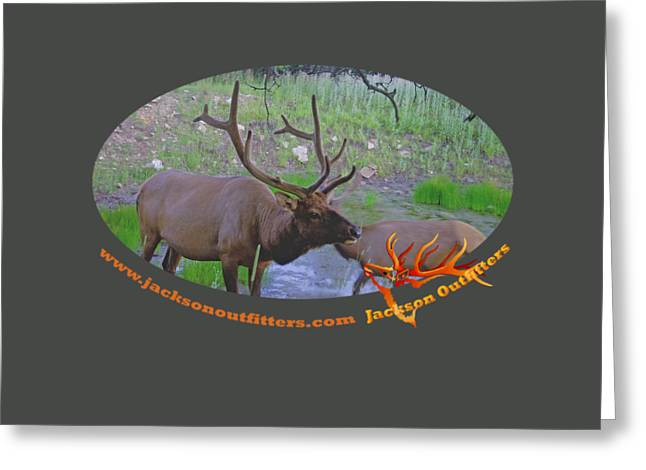 Six Point Bull Elk In Colorado Greeting Card