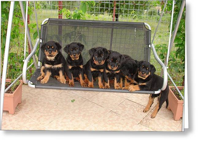Six Rottweiler Puppies Lined Up On A Swing Greeting Card by Tracey Harrington-Simpson