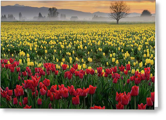 Greeting Card featuring the photograph Skagit Valley Misty Morning by Dan Mihai