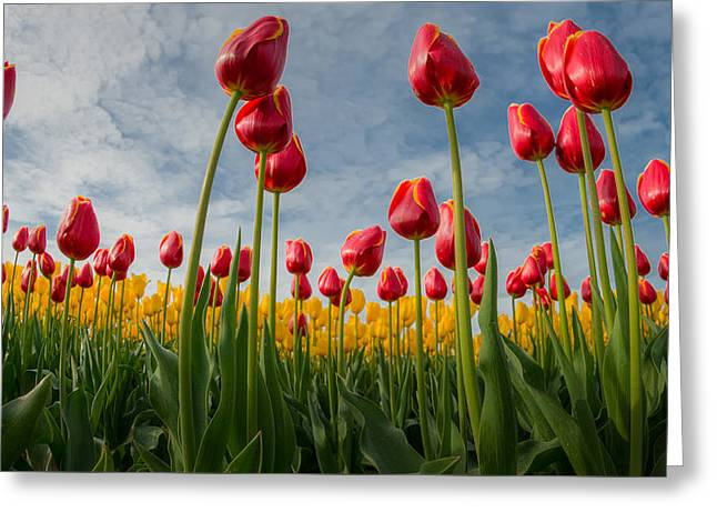 Greeting Card featuring the photograph Skagit Valley Spring Joy by Dan Mihai