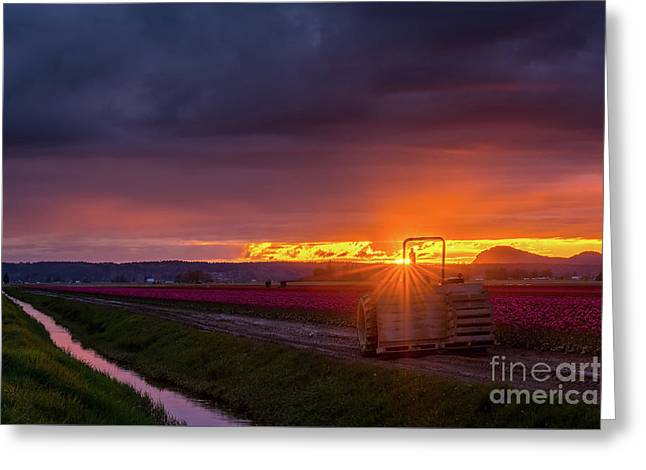 Greeting Card featuring the photograph Skagit Valley Tractor Sunstar by Mike Reid