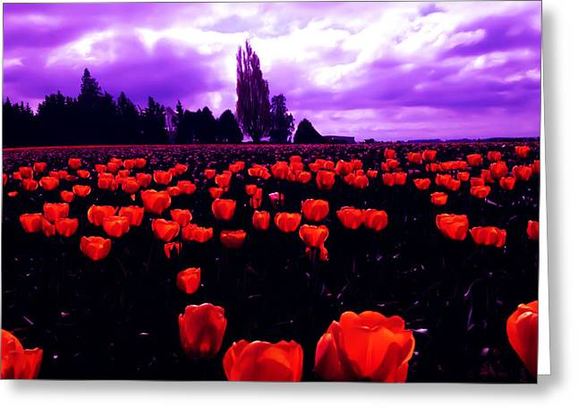 Skagit Valley Tulips Greeting Card