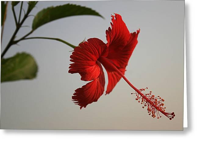 Skc 0450 Vibrant Hibiscus Greeting Card