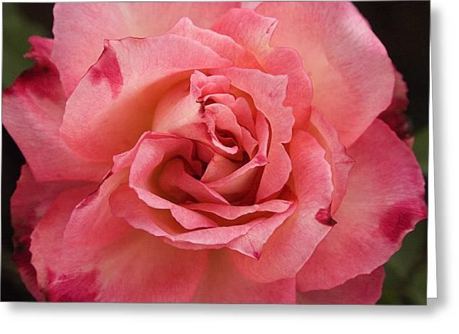 Skc 4942 Pink Harmony Greeting Card