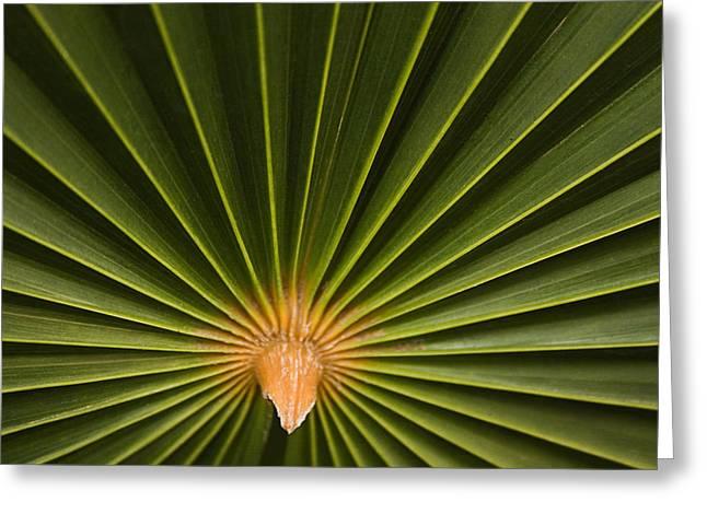 Skc 9959 The Palm Spread Greeting Card by Sunil Kapadia