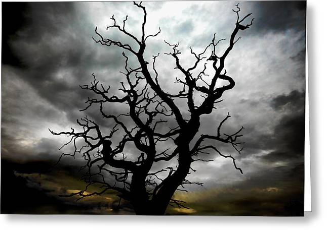 Skeletal Tree Greeting Card by Meirion Matthias