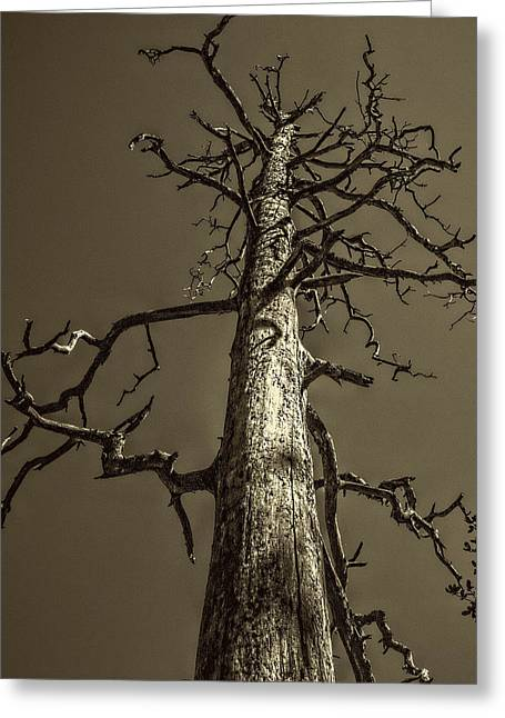 Skeletal Tree Sedona Arizona Greeting Card