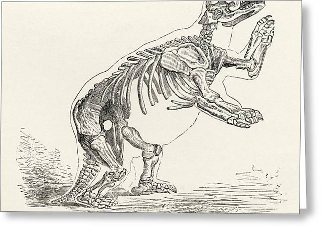 Skeleton Of Mylodon Darwinii From The Greeting Card by Vintage Design Pics