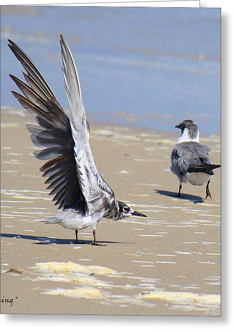 Skiddish Black Tern Greeting Card by Roena King