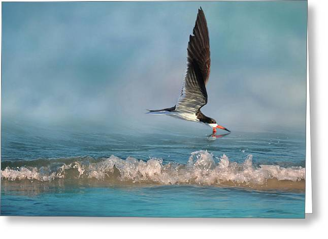 Skimming Off The Top 2 Greeting Card by Donna Kennedy
