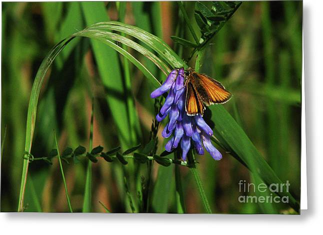 Greeting Card featuring the photograph Skipper Butterfly by Deborah Johnson