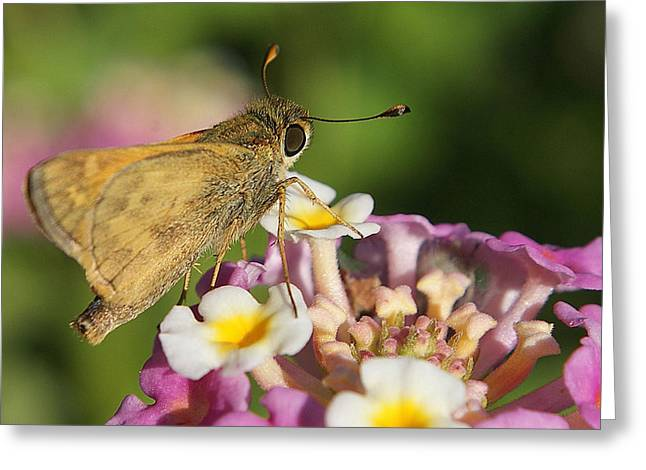 Skippers Keepers Greeting Card by DiDi Higginbotham