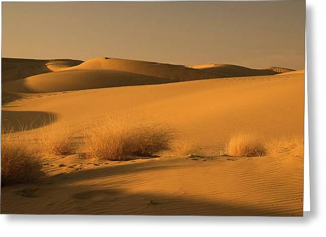 Skn 1124 The Desert Landscape Greeting Card by Sunil Kapadia