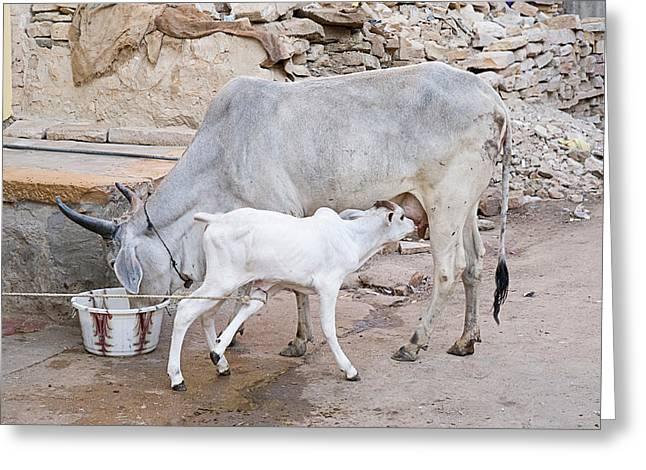 Skn 1654 Feeding Time Greeting Card by Sunil Kapadia