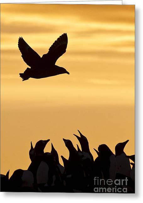Skua And Penguins Greeting Card