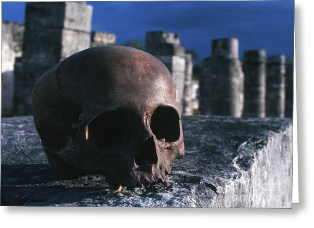 Skull At Chichen Itza Greeting Card by The Harrington Collection