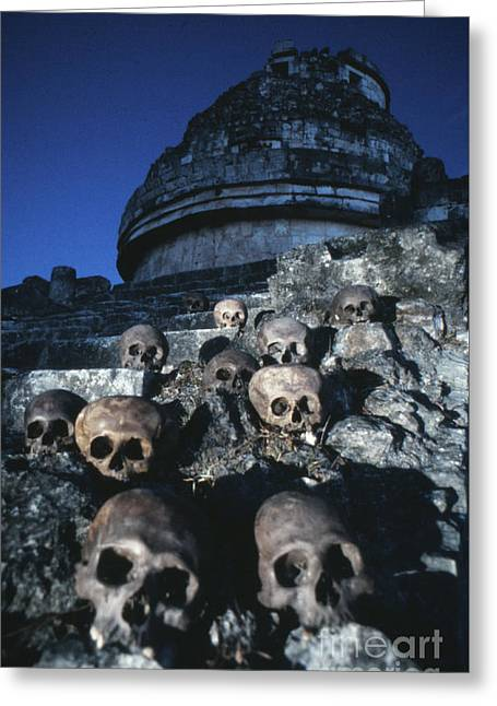 Skulls At Chichen Itza Greeting Card by The Harrington Collection