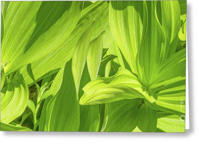 Skunk Cabbage Greeting Card by Mellissa Ray