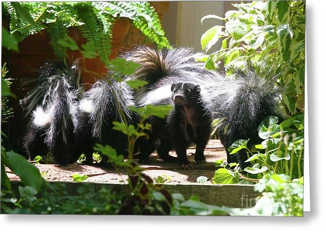 Skunk Family Greeting Card