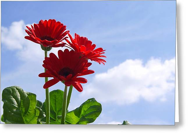 Sky Flower Greeting Card