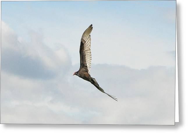 Flying Hawk Greeting Cards - Sky High Greeting Card by Bill Cannon