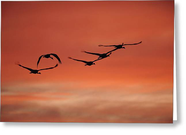 Sky On Fire Greeting Card by Philippe Francis
