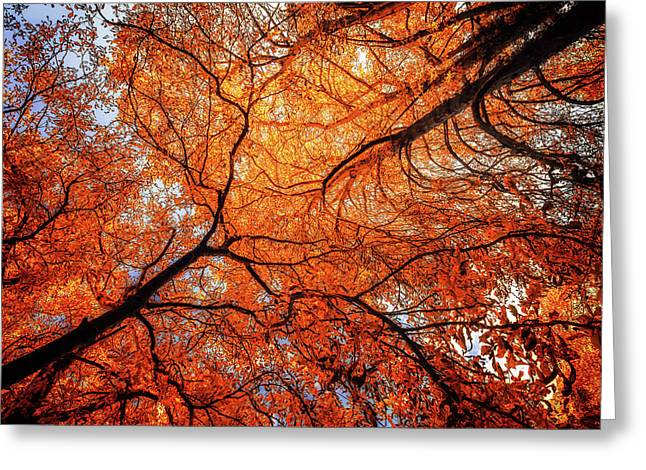Sky Roots In Forest Red Greeting Card