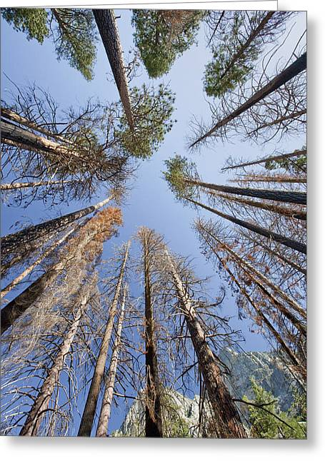 Sky-trees Greeting Card by Rick Pham